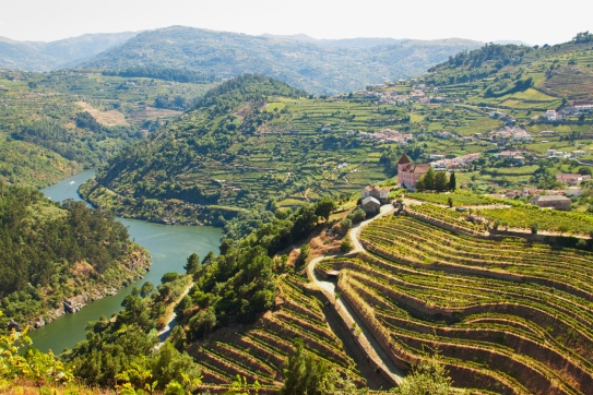 vineyards ribeira do Douro